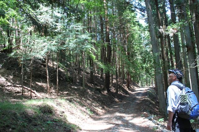欧米圏で大人気!日本発「森林浴/Shinrin-yoku」 効果検証された森で体験!新感覚の「フフ山梨」森林セラピーensorq限定プログラム